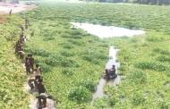 इंद्रायणी नदीतील जलपर्णी काढायला सुरुवात
