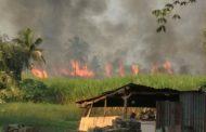 उदगांव-चिंचवाड मळी परिसरात २० एकर ऊस जळून खाक;१८ लाखाचे नुकसान