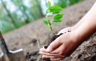 वटपौर्णिमेला वडाच्या झाडाची पूजा करून वृक्षसंवर्धनास चालना द्या; स्वातंत्र्यवीर सावरकर मंडळाचे आवाहन