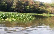 नोटीस बजावल्यानंतर मुळा नदीतील जलपर्णी काढण्यास सुरूवात
